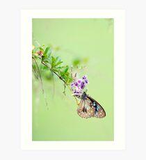 Butterfly Blue 2 Art Print