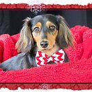 A very doxie Christmas 10 by Sarah Guiton