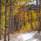 Early Winter Kebler Pass by Luann wilslef