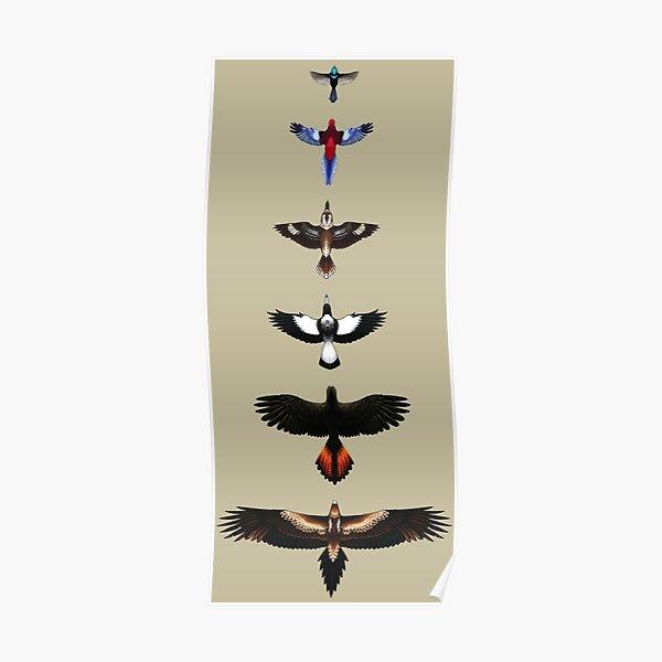 Australian Birds - Illustrated Poster