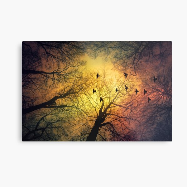inVasion - tree silhouettes and flock of birds against a dramatic sky Metal Print