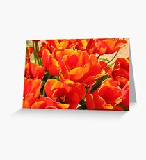 Orange Tulips Greeting Card