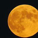 Hunters Full Moon  by debraroffo