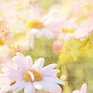 Song of Spring Lovely Pale Pink Daisies Asters by Beverly Claire Kaiya