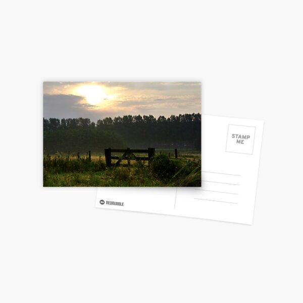 Morning light pastures  Postcard