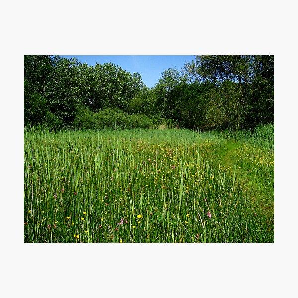 Wet grasslands  Photographic Print