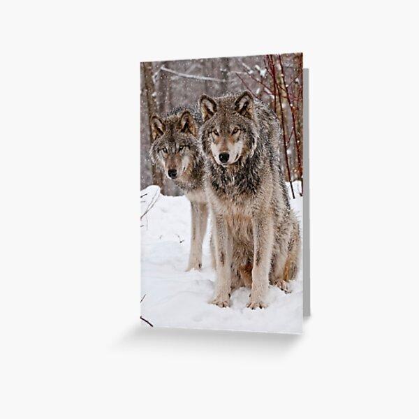 Timber Wolf Pair Greeting Card