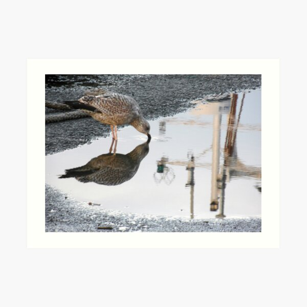 154 - GULL REFLECTION AT AMBLE- 01 (D.E. 2013) Art Print