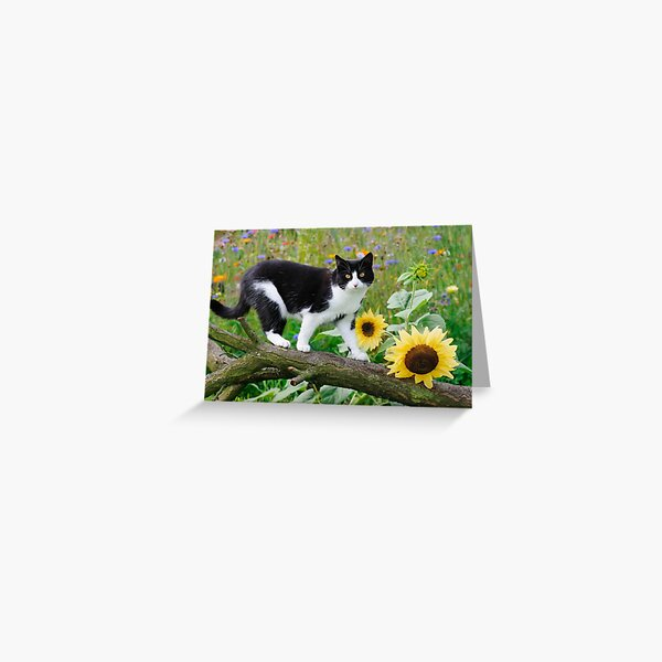 Tuxedo cat and sunflowers Greeting Card