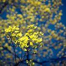 Golden by Rebecca Lefferts