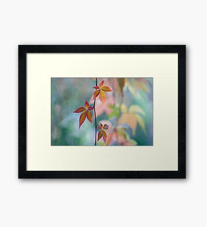 Atumnal color surge Framed Print