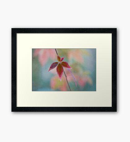 The solitair Framed Print