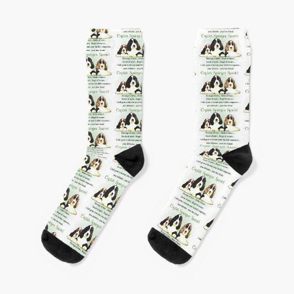 English Springer Spaniel Puppies Heritage of Love  Socks