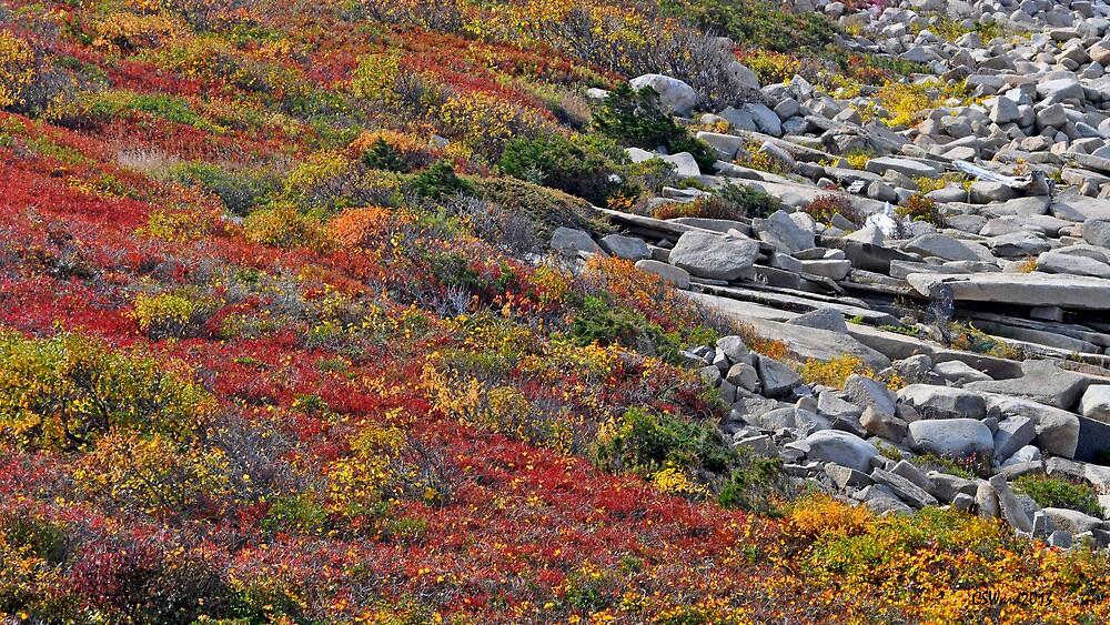 Coastal Color Palate by Caleb Ward