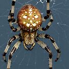 Along Came A Spider by Heather Haderly