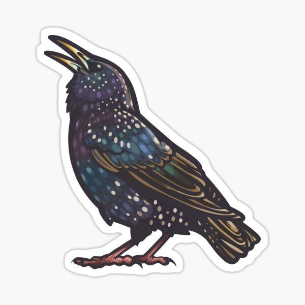 European Starling Sticker