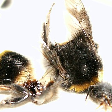 Bee crash disaster (2005)  by Rusku