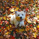 !FALLING LEAVES (2 Per Day)!
