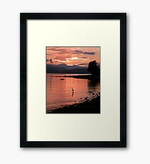 Sunset Heron Framed Print