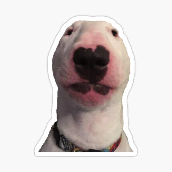 Walter meme Sticker