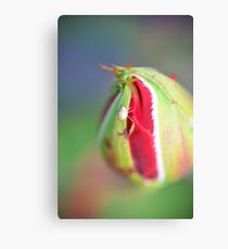 Aphid on Rose Bud Canvas Print