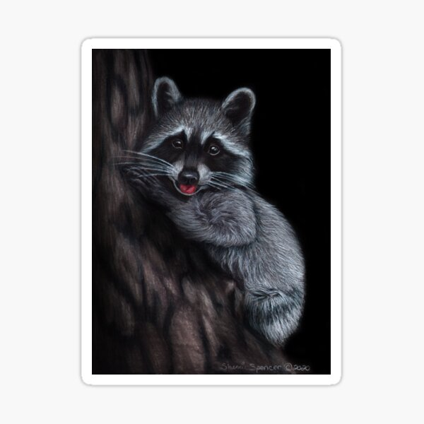 Raccoon with Tongue Sticking Out Sticker