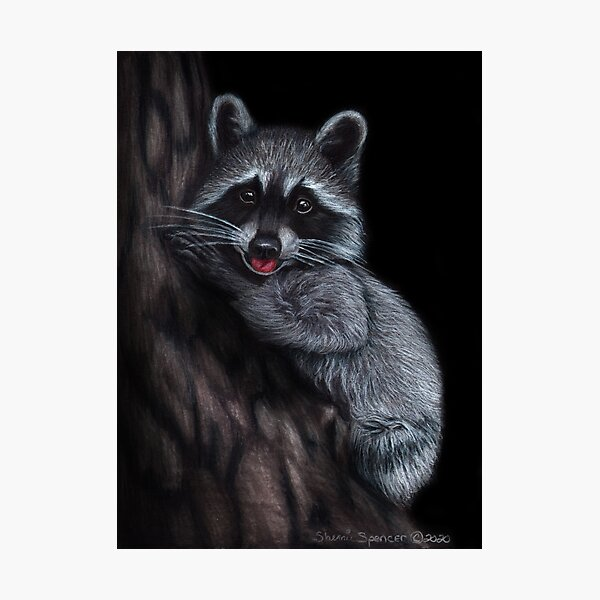 Raccoon with Tongue Sticking Out Photographic Print