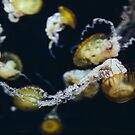 Dance of the Sea Nettles by PHLBike