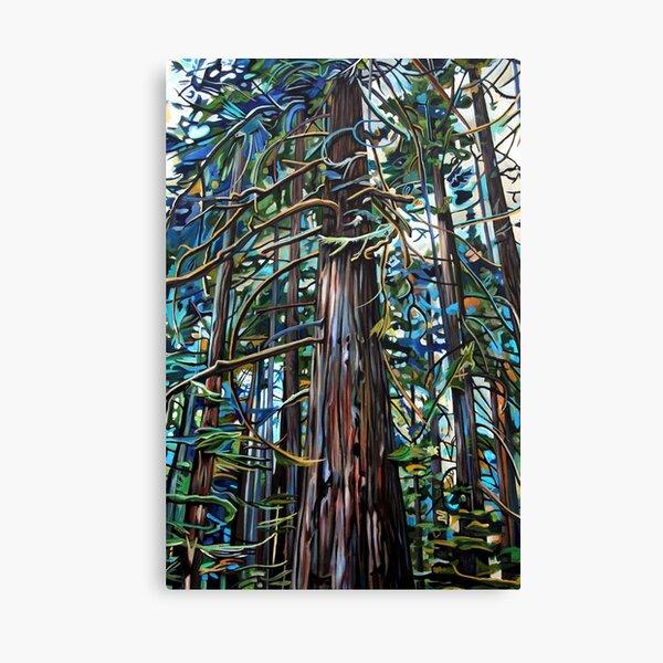 Tofino Rain Forest Canvas Print