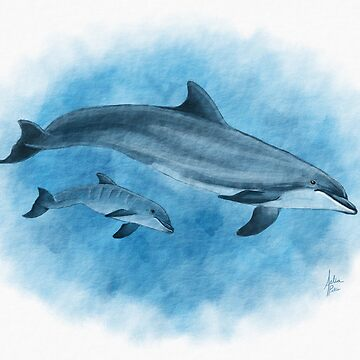 Dolphin Mother and Calf by Art-by-Aelia