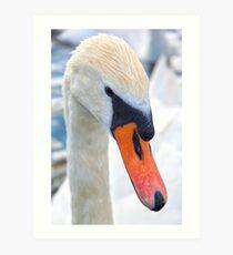 Hyde Park Swan Art Print