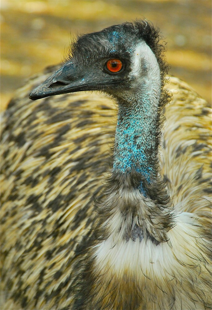 Emu Profile by Penny Smith