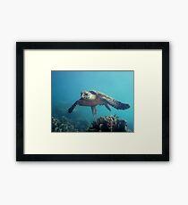 Flying Hawksbill Framed Print