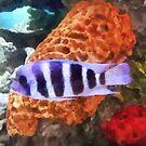 Striped Tropical Fish Frontosa by Susan Savad