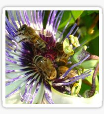 Passion Flower and Honey Bees Collecting Pollen Sticker