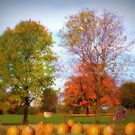 Autumns Bounty by Linda Miller Gesualdo