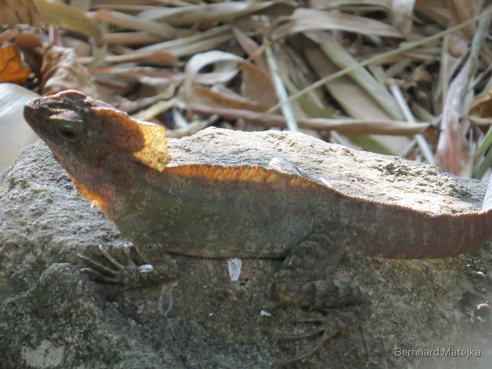 saurian with gloriole - lagarto con aureola by Bernhard Matejka