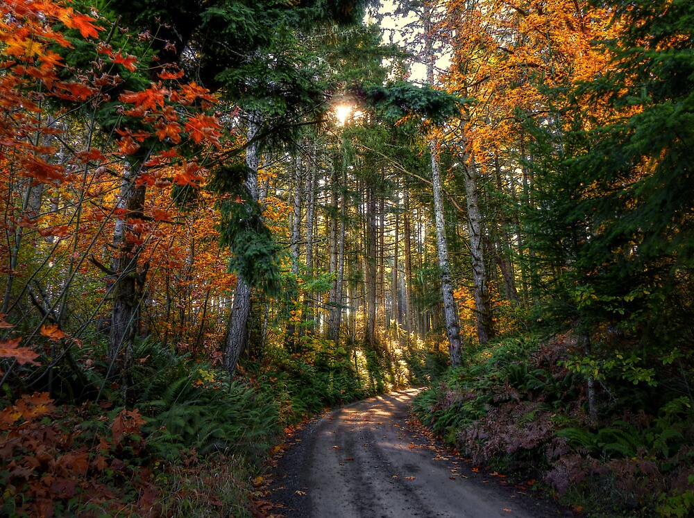 Shade and Sun ~ Fall Colors ~ by Charles & Patricia   Harkins ~ Picture Oregon