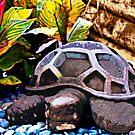 """The Turtle"" by Bruce Jones"
