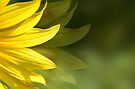 Yellow Petals by Elaine Manley
