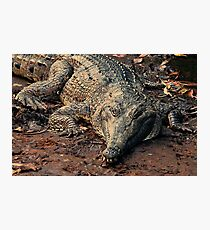 Never smile at a crocodile Photographic Print