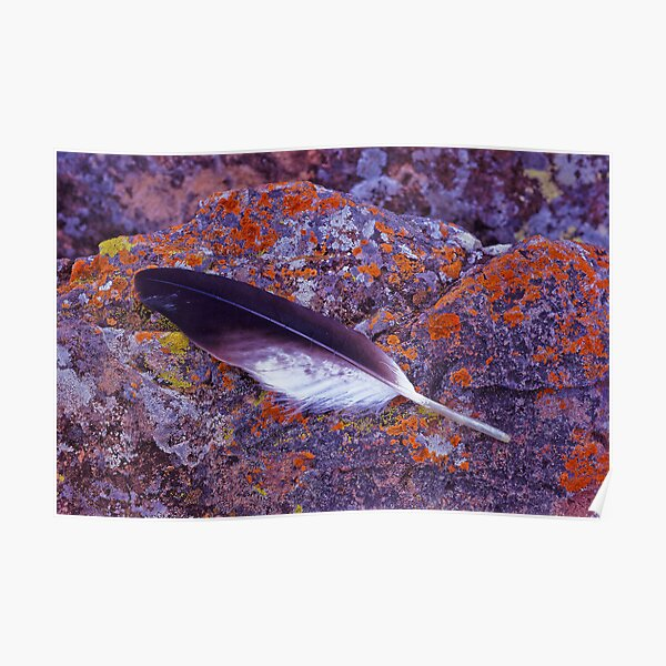 Eagle feather on lichen Poster