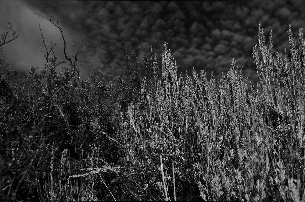 B&W Field Brush Against Sky by ammartz