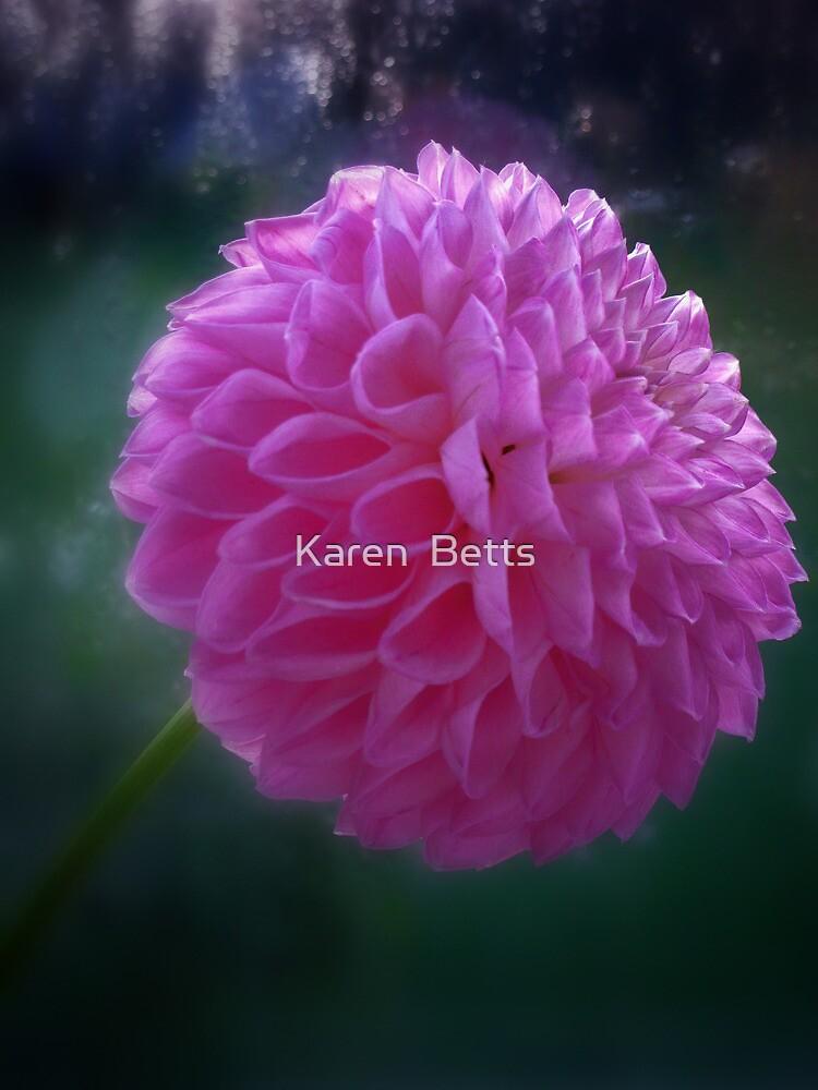 A flush of pink  - Dahlia flower head by Karen  Betts