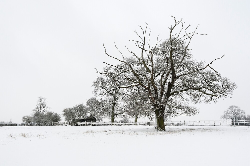 Branching Out in Winter by mhfore