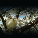 Amongst the Blossoms by Josie Jackson