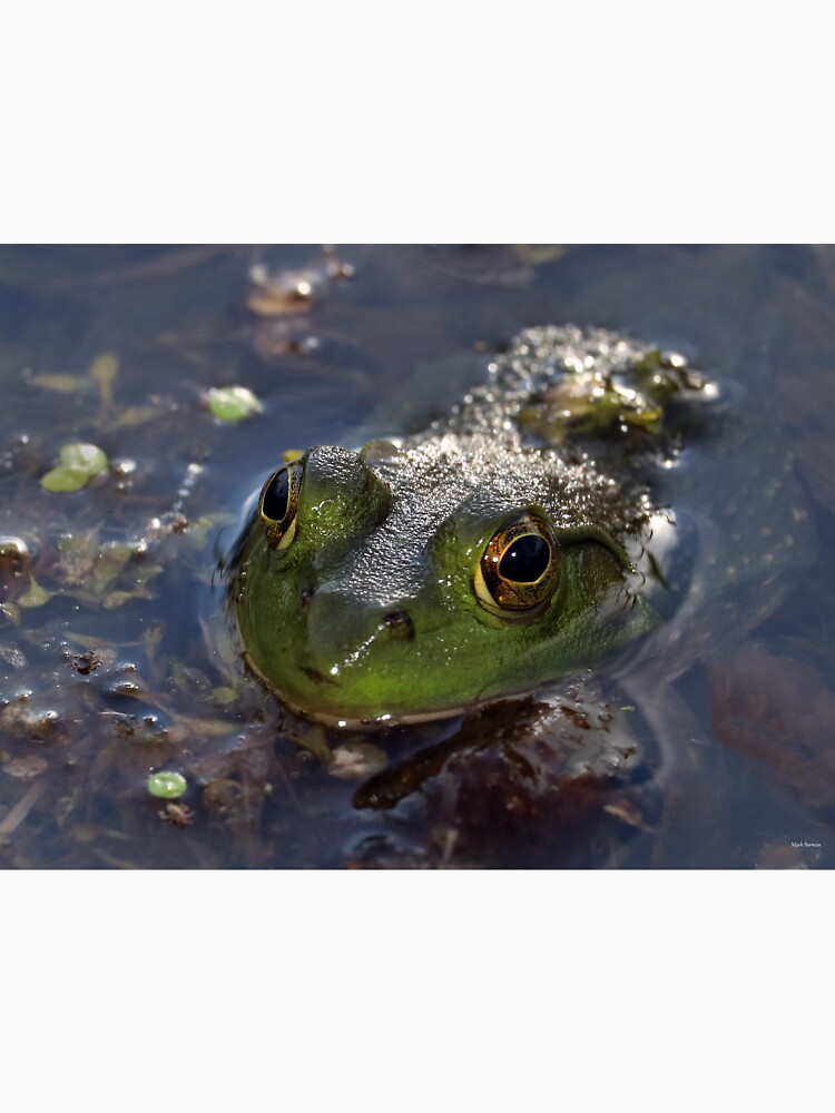 Green Frog Face by mark-bugs-org