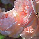 A gentle Bunch by Lozzar Flowers & Art