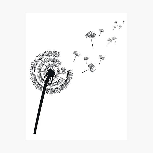 Dandelion plant dandelion plant flower Photographic Print