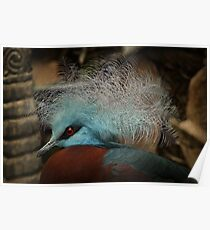 Victoria Crowned Pigeon in tribal decor Poster